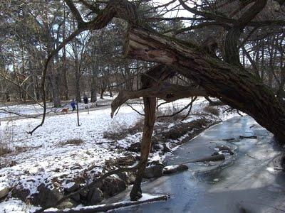 Dog & Jogger at High Park Toronto in winter.