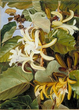 ArtSmart Roundtable: Marianne North, Victorian adventurer & botanical artist
