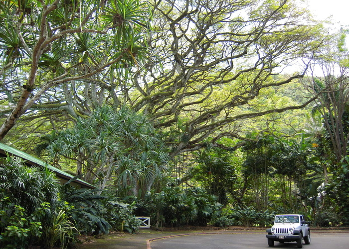 Waimea Valley jeep