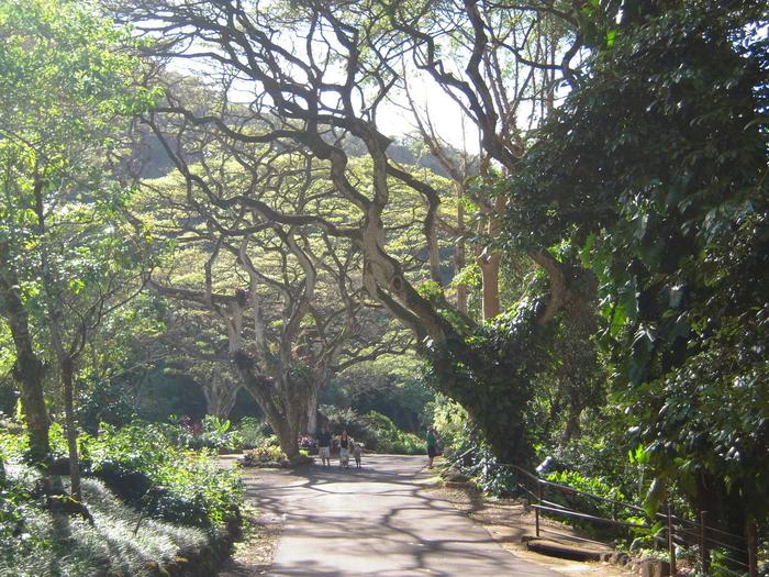 Waimea botanical garden Oahu